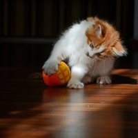 Кошачьи игры в мяч :: Александр Бойко