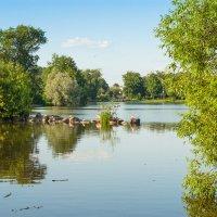 Вечер на озере Разлив :: Виталий