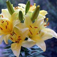 Очень необычный - это лилии цветок! :: Валентина ツ ღ✿ღ