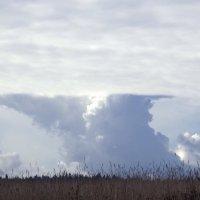 Облако в виде наковальни. :: Наталья Ванчикова