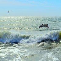Дельфины :: Виктор Шандыбин