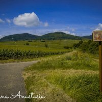 Дорога к виноградникам :: Анастасия Елкина