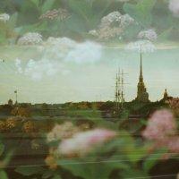 Город цветов :: Ivan Zaytcev