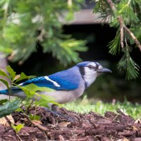 Птица :: MVMarina