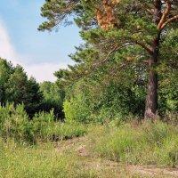 Дорожка в лесу :: Дмитрий Конев