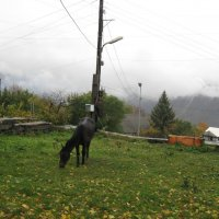 Лошадь :: Volodya Grigoryan