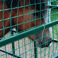 Мама лошадь :: Света Кондрашова