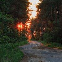 По лесной дороге на закат :: Ирина Приходько