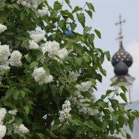 Весна в Муроме :: Виктор Кораблев