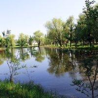 Пруд в парке :: раиса Орловская