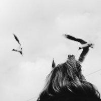 Чайки в голове :: Smotrikachto SMOTRI