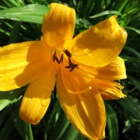 В тени цветка.... :: Валентина Жукова
