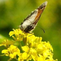 мохнатые крылья- а как же аэродинамика ? :: Александр Прокудин