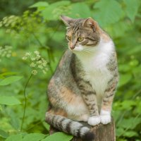 кошка в лесу :: Анастасия