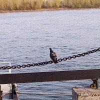 мечты о дальнем плавании :: Иннокентий Авдонин