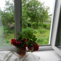 Когда за окном дождь :: Ольга