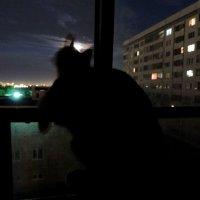 Лунный кот. :: bemam *