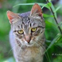 Cat :: Kirchos Foto