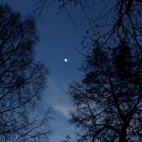 Лунный вечер :: Damir Si