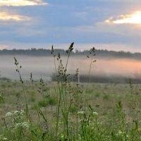 летнее утро :: vg154