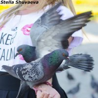 голуби :: Стелла