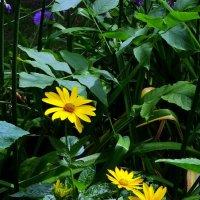 Городские цветы перед дождем... :: Владимир Бровко