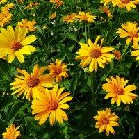 Городские цветы на клумбе :: Владимир Бровко