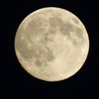 Луна :: Дарья Симонова