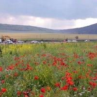 Крымский пейзаж с маковым полем :: Ната Волга
