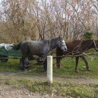 Сельская  повозка  в  Городенке :: Андрей  Васильевич Коляскин