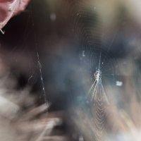 Паучок на кактусах :: Надежда