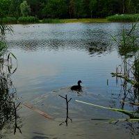 Ранее утро на лесном озере :: Владимир Бровко