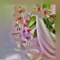 Цветет орхидея :: Наталия Лыкова
