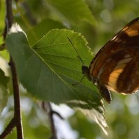 Бабочка :: Анна Коновалова