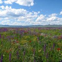 Цветы Армении :: Volodya Grigoryan