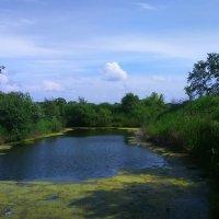 Маленькое озеро. :: Татьяна ❁