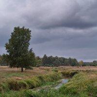 Полесский пейзаж. :: Андрий Майковский