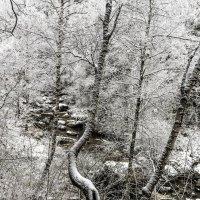 Черно-белая зима :: Антон Васильев