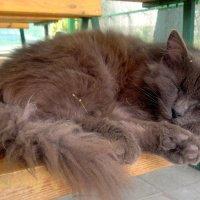 сон в летний день ( в придорожном кафе) :: Александр Прокудин