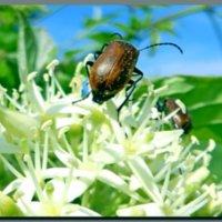 из  жизни  насекомых. :: Ivana