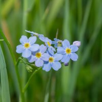цветы у речки :: Ирина Кузина