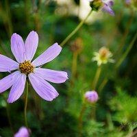 в саду... :: Ксения