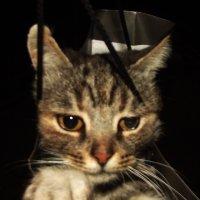Мои животинушки :: РоЗа Бара