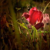 Согретые солнцем. :: ALISA LISA