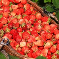 Сладкий урожай :: Татьяна Ломтева