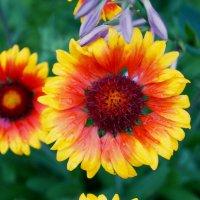 Оранжевое солнце :: Вероника Озем