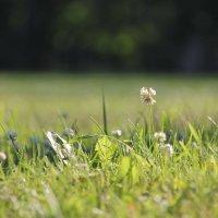 Удивительно, что может сделать один простой цветок с душой человека! :: Tatiana Markova