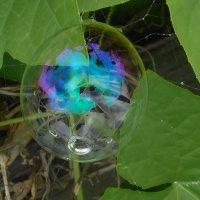 Мыльный пузырь :: Владимир Савельев