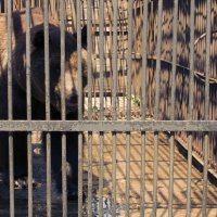 Бурый медведь :: Дмитрий Строж