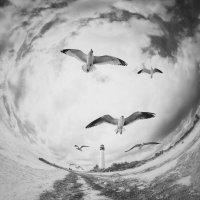 Freedom… :: Roman Mordashev